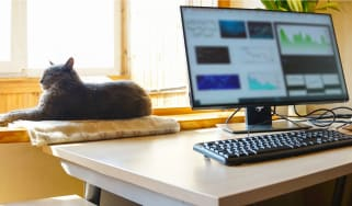 A desktop computer with wondows open on a desk with a keyboard and a cat sunbathing on a windowsill behind it
