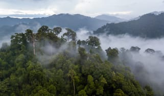 Fog rising from the Amazon rainforest