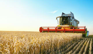 A combine harvester harvests ripe wheat