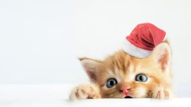 Kitten with santa hat