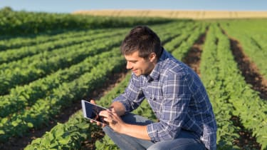 Farmer in a field looking at a tablet