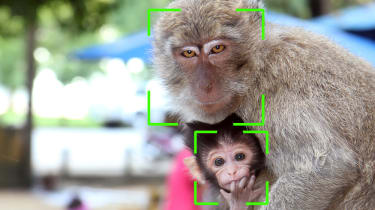A female monkey and her child classified by AI