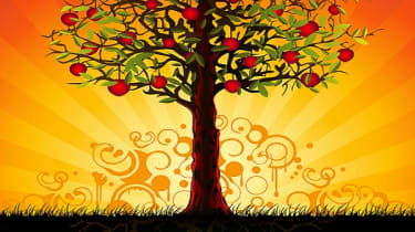 Apple tree with roots